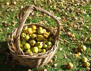 Green Ash Orchard Basket